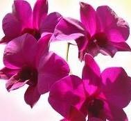 [تصویر: http-www-empower-yourself-with-color-psy...y-1-9.jpeg]